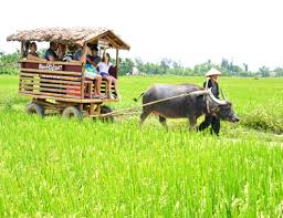 Hoi An buffalo cart and romantic sunset cruise